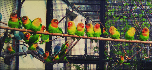 Parrot Family Photography
