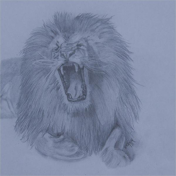 Amazing Lion Drawing