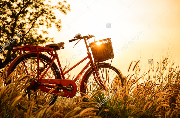 Beautiful Landscape Photography of Bicycle