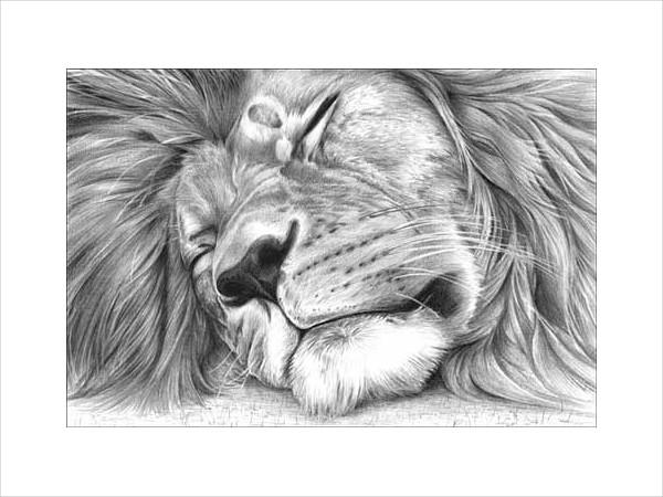 Drawing of Sleeping Lion
