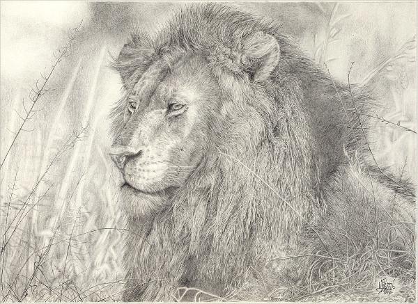 Eye-Catching Lion Drawing