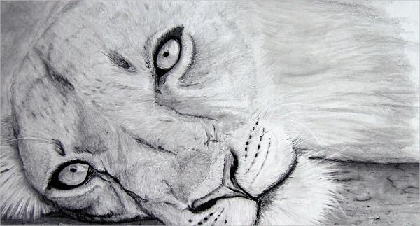 Fantastic Lion Drawing