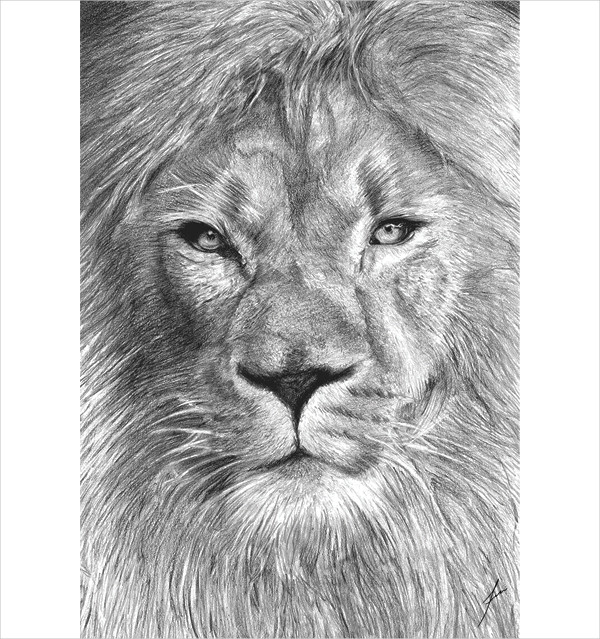 Feline Drawing