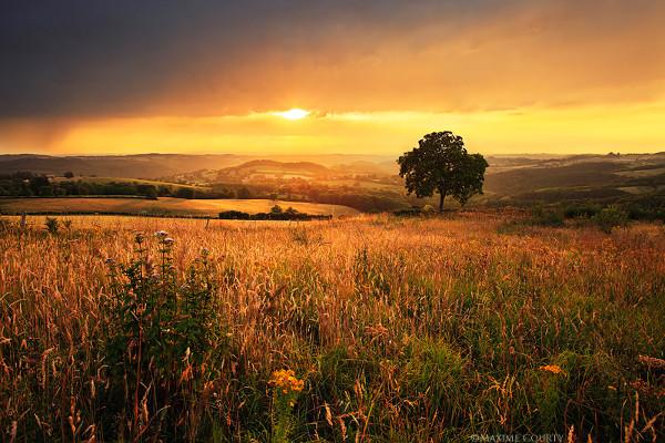 Golden Fields Landscape Photography