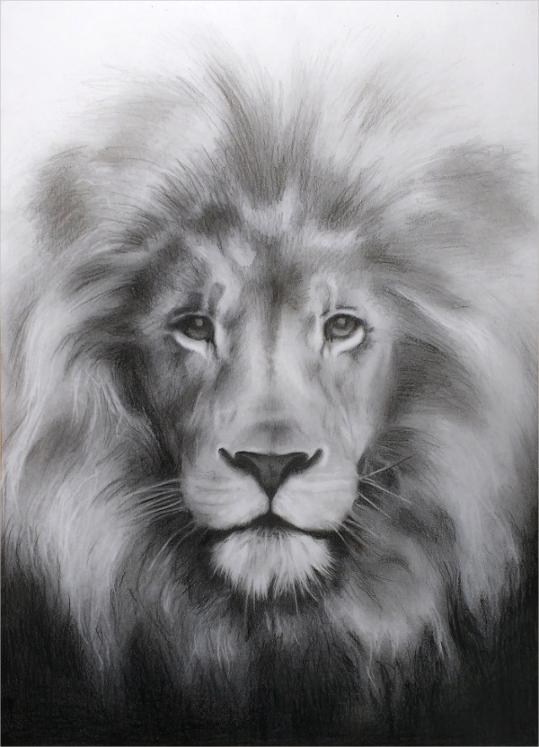 Graphite Drawing of a Lion