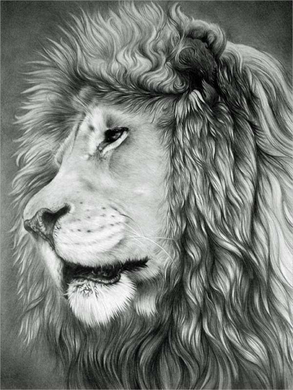 Pencil Drawing of a Lion