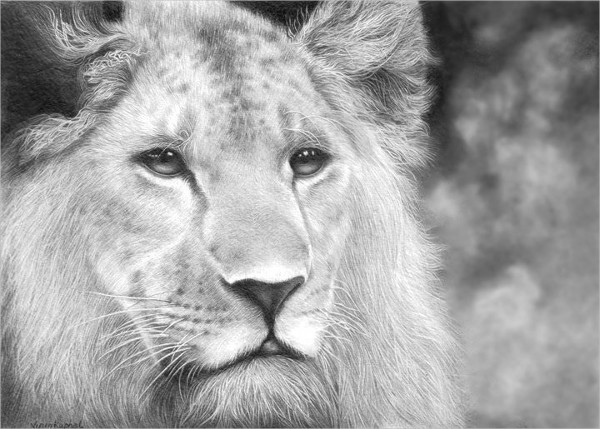 Wonderful Lion Drawing